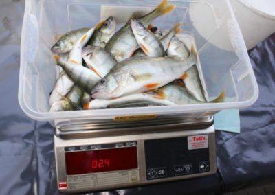 2016-vereinsfischen-2-3_lbb
